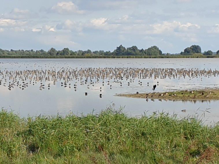 Vogels in overvloed bij Ezumakeeg