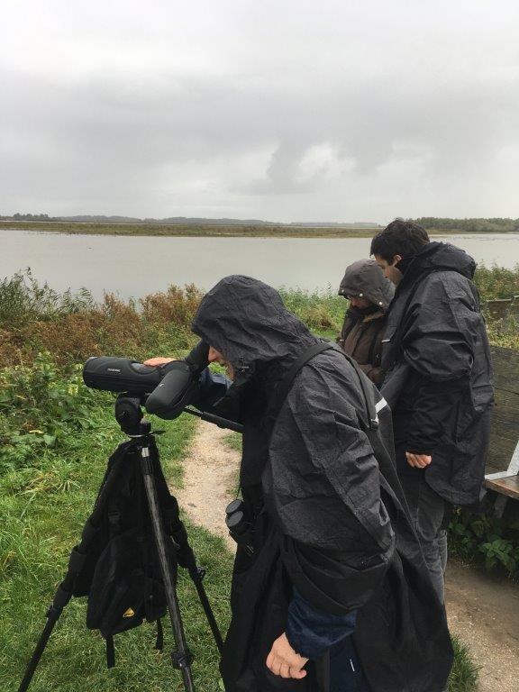 Verslag Privé vogelexcursie Lauwersmeer 11-10-20