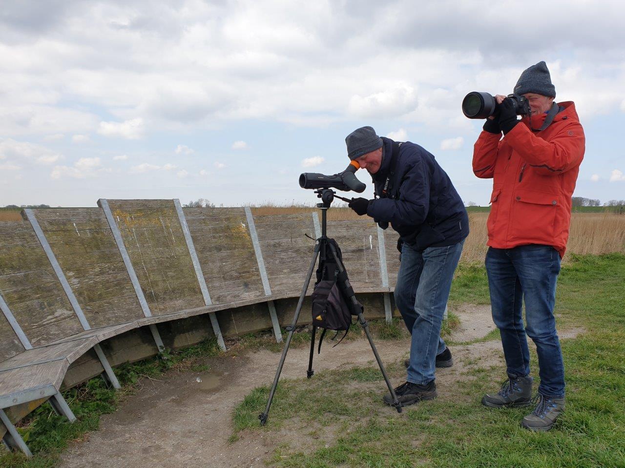 Vogelexcursie Lauwersmeer Kijken naar Kemphanen