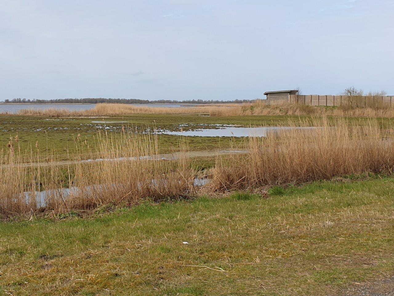 Vogels kijken Lauwersmeer Jaap Deensgat