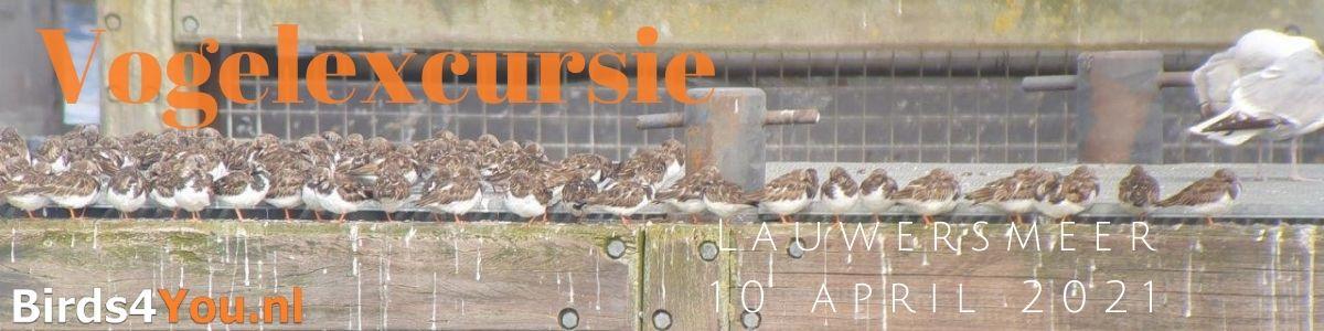 Vogelexcursie Lauwersmeer 10 april 2021