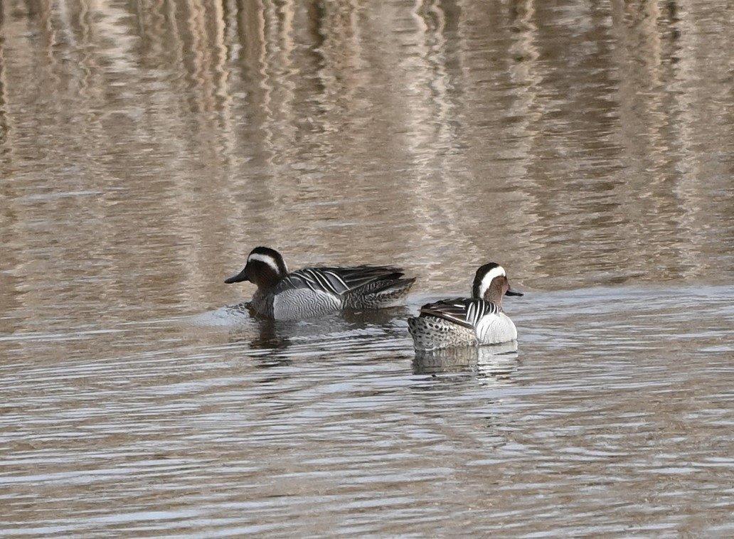 Vogels Spotten Zomertalingen (foto door Jacques)