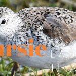 Verslag Privé vogelexcursie Lauwersmeer 11-4-21