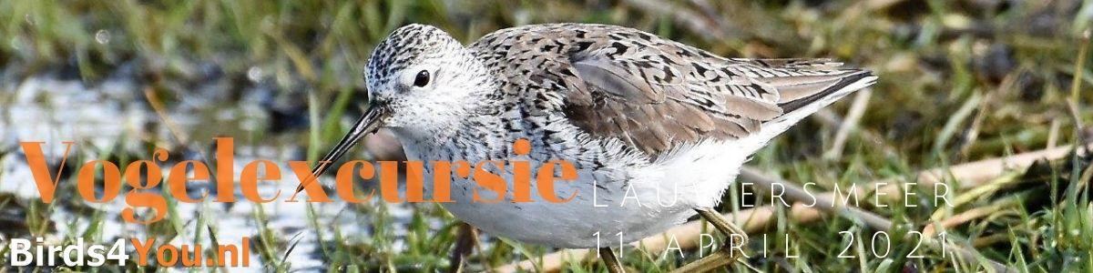 Vogelexcursie Lauwersmeer 11 april 2021