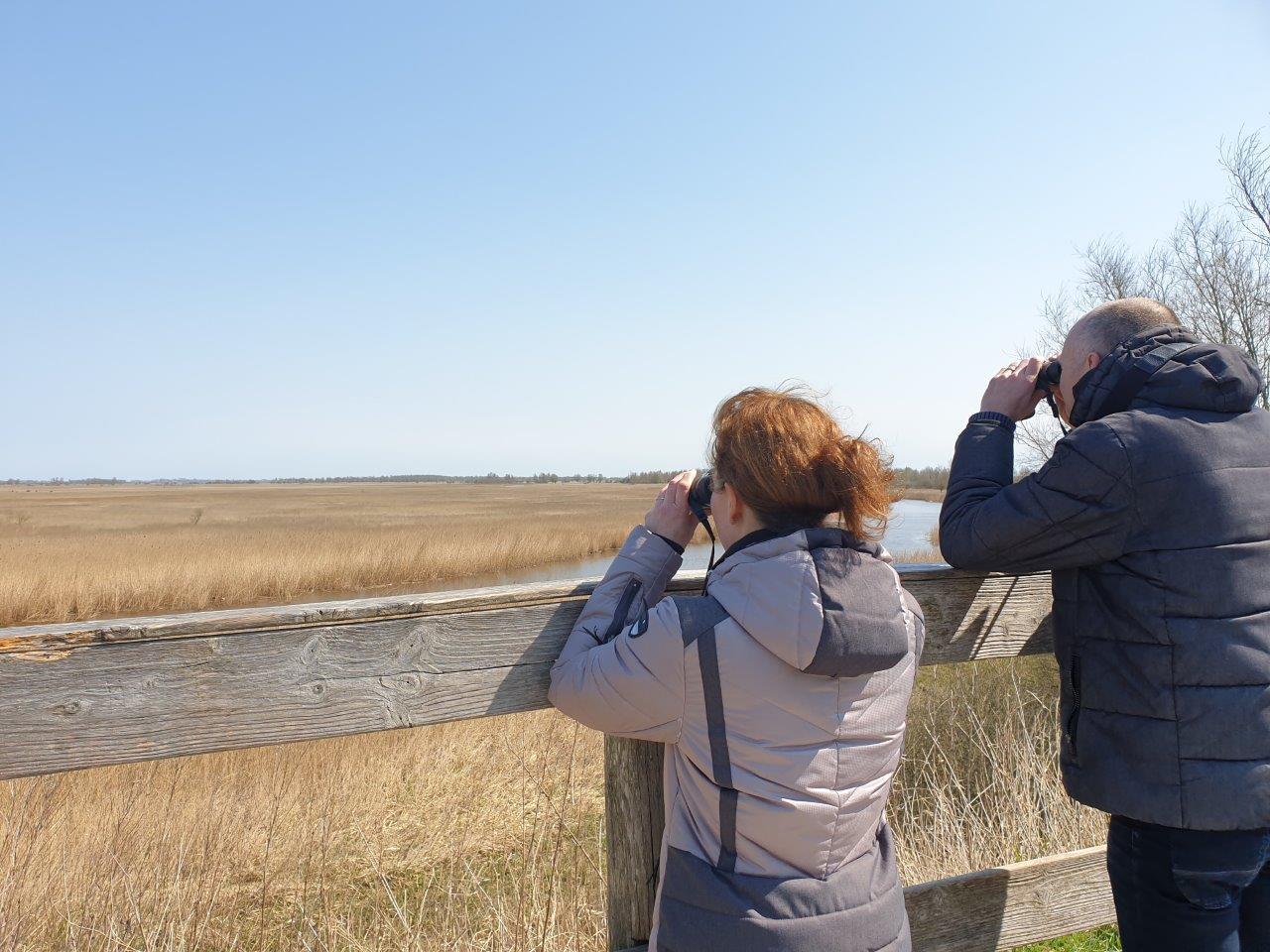 Vogels spotten Lauwersmeer Kijken naar Bruine Kiekendief