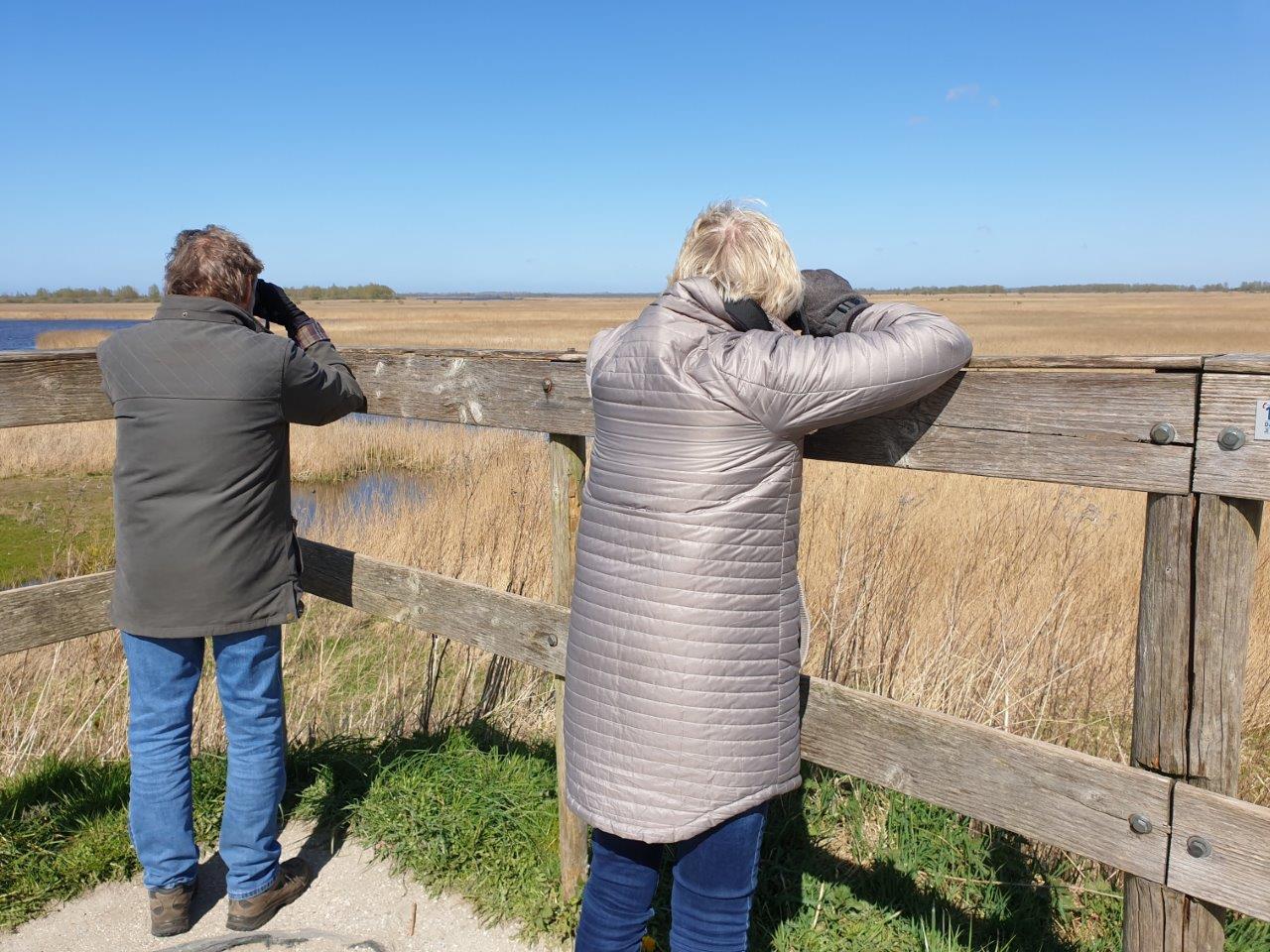 Kijken naar Bruine Kiekendieven