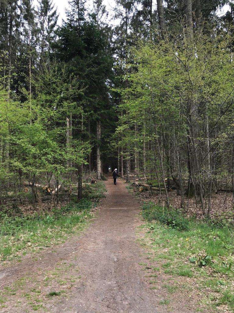 Wandeling door het bos (foto door deelneemster)