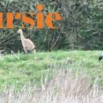Verslag Privé vogelexursie Fochteloërveen 9-5-21