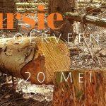 Verslag privé vogelexcursie Fochteloërveen & Hijkerveld 20-5-21