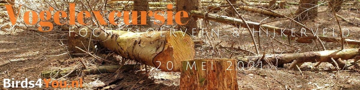 Vogelexcursie Fochteloërveen & Hijkerveld 20 mei 2021