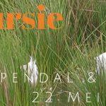 Verslag Privé vogelexcursie Diependal & Hijkerveld 22-5-21