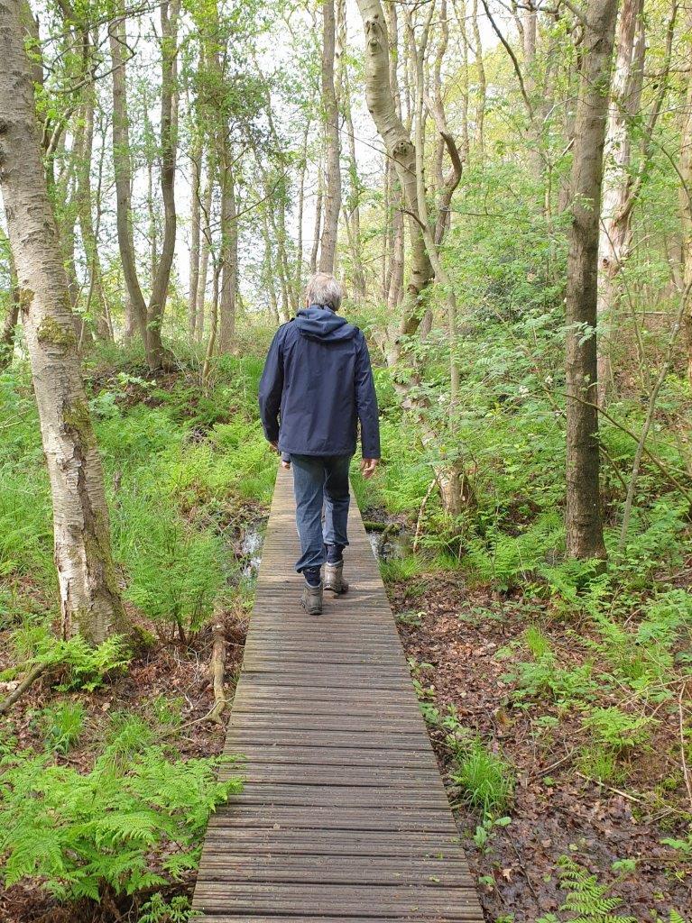 Wandelen door het bos