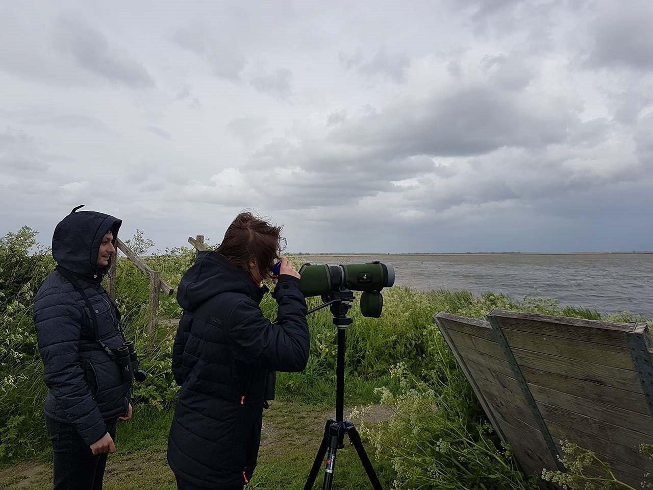 Deelnemers kijken naar de Kluut en Steltkluut in de harde wind.
