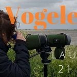 Verslag Privé vogelexcursie Lauwersmeer 21-5-21