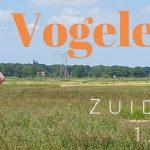 Verslag Privé vogelexcursie Zuidlaardermeer 13-6-21