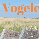 Verslag Privé vogelexcursie Lauwersmeer 16-6-21