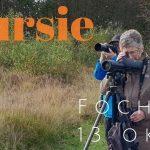 Verslag Privé vogelexcursie Fochteloërveen 13-10-2021