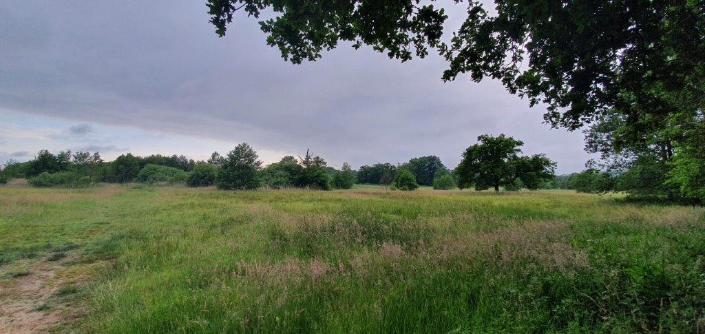 Landschap (foto door Daan)