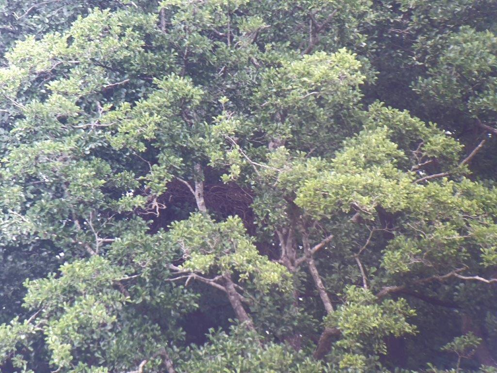 Het nest in de bomen