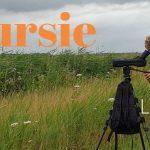 Verslag Privé vogelexcursie Lauwersmeer 8 juli 2020