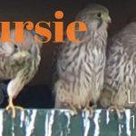 Verslag Privé vogelexcursie Lauwersmeer 10 juli 2020