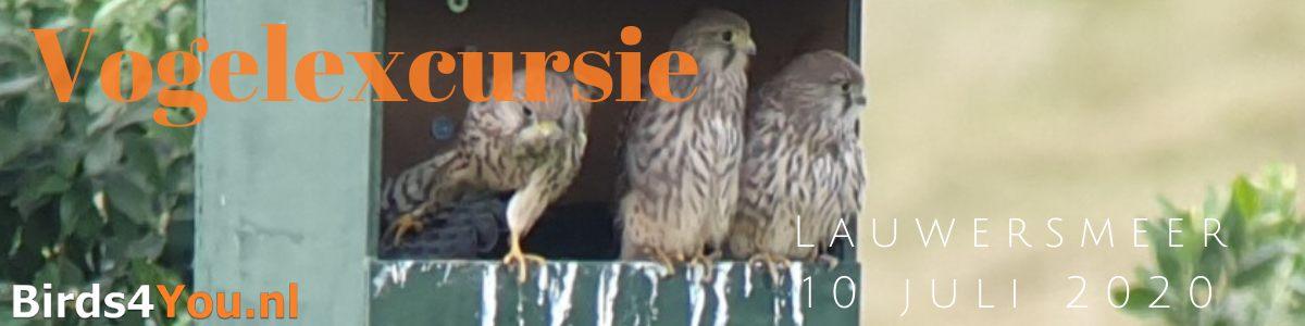 Vogelexcursie Lauwersmeer 10 juli 2020