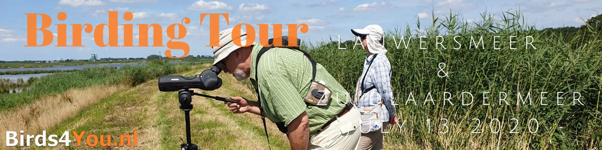 Birding Tour Lauwersmeer Zuidlaardermeer july 13 2020