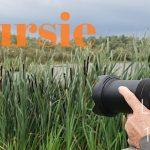 Verslag Privé vogelexcursie Lauwersmeer 16 juli 2020