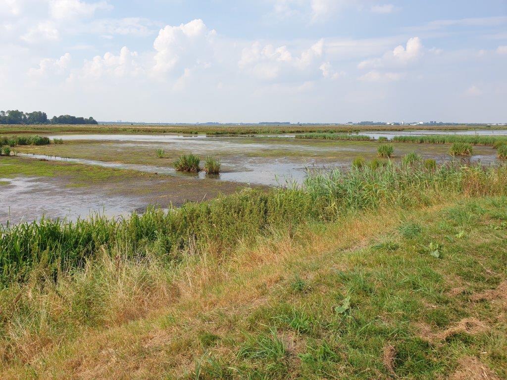 Bijna droge polder