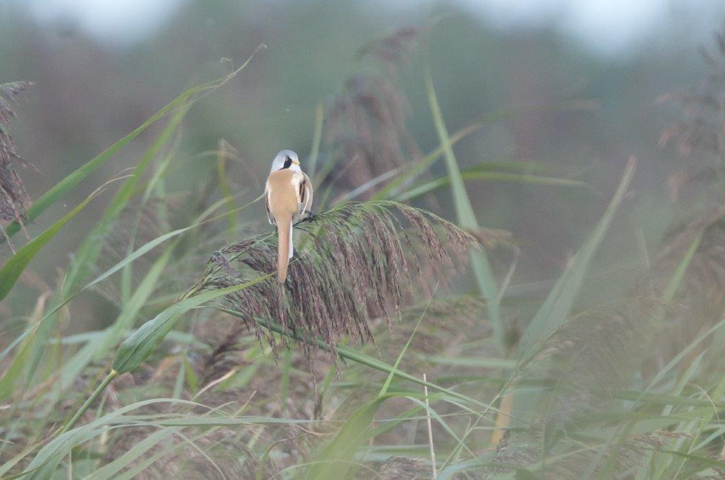 Baardman (foto door deelnemer)