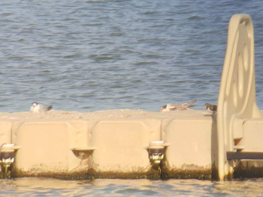 Drijvers met rustende vogels