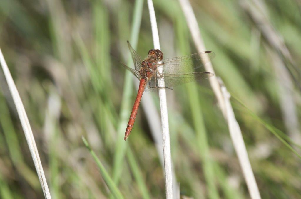 Libelle (foto door deelnemer)