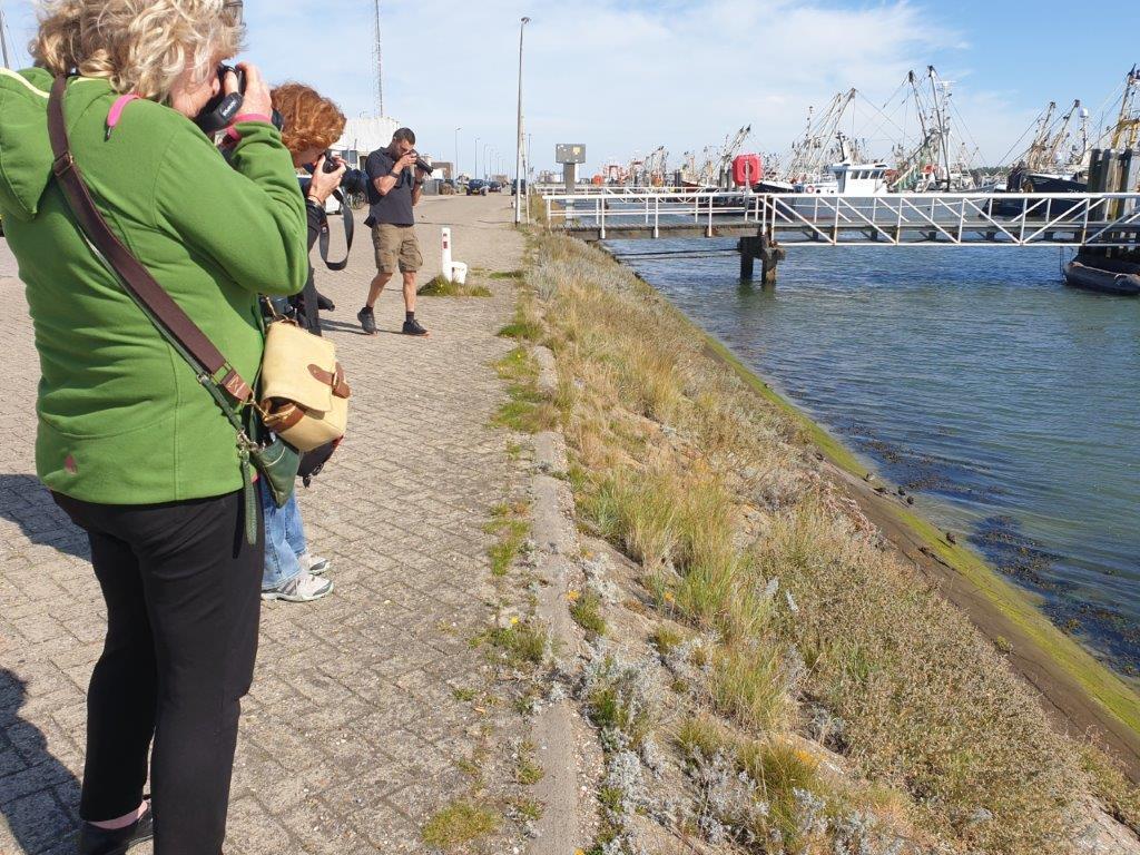 Deelnemers fotograferen Steenlopers