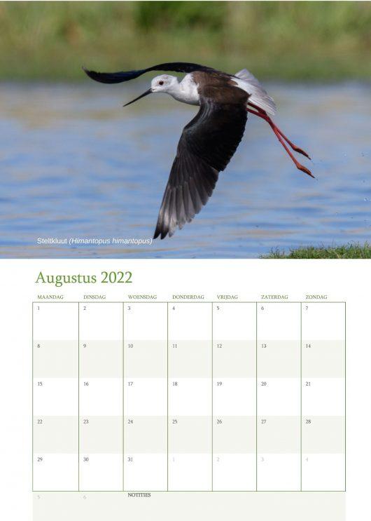 Vogelkalender 2022 Augustus