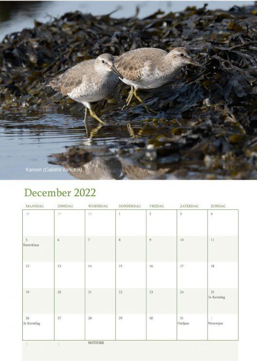 Vogelkalender 2022 December