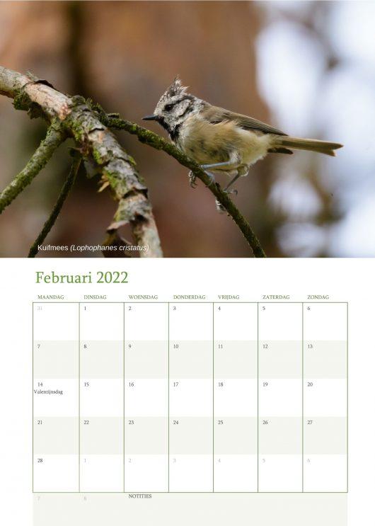 Vogelkalender 2022 Februari