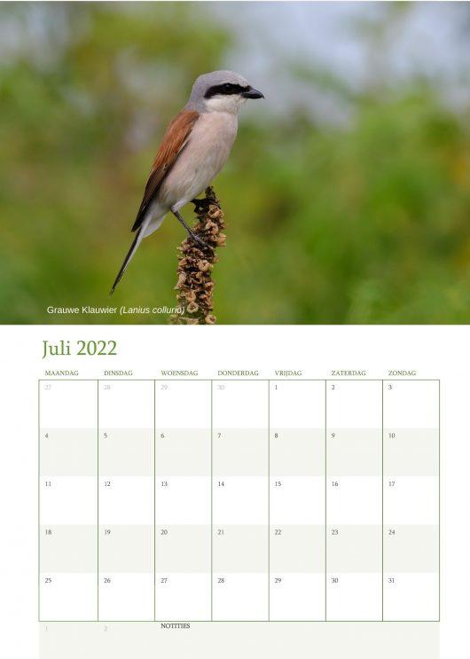 Vogelkalender 2022 Juli