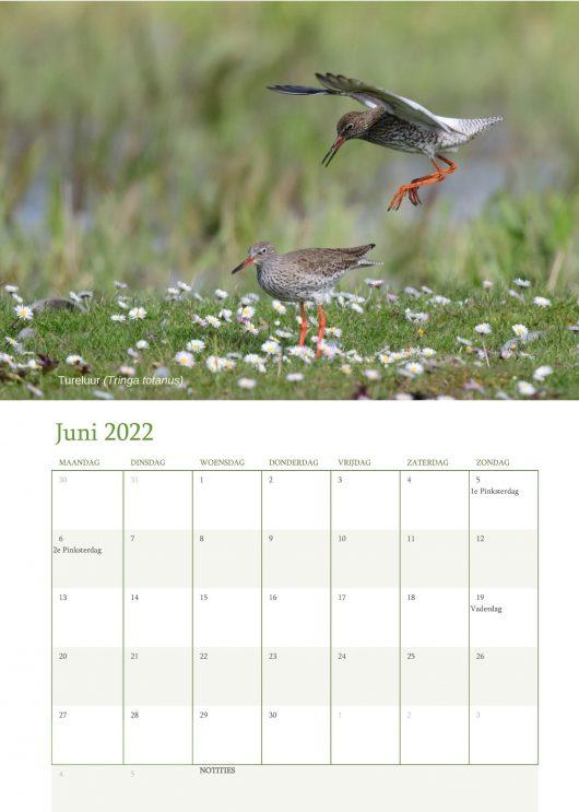 Vogelkalender 2022 Juni