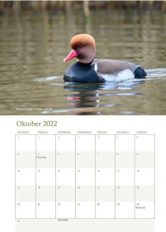 Vogelkalender 2022 Oktober