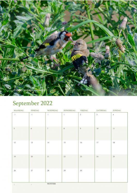 Vogelkalender 2022 September
