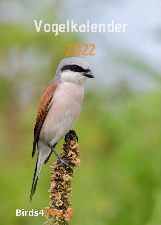 kalender 2022 Voorzijde