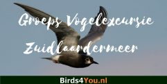 Groeps Vogelexcursie Zuidlaardermeer