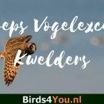 Vogelexcursie Winter op de Kwelders 30 januari 2021