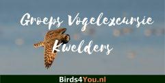 Groeps Vogelexcursie Winter op de Kwelders Friesland