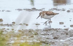 Groeps vogelexcursie Trekvogels Waddenzee Friesland in september 2020